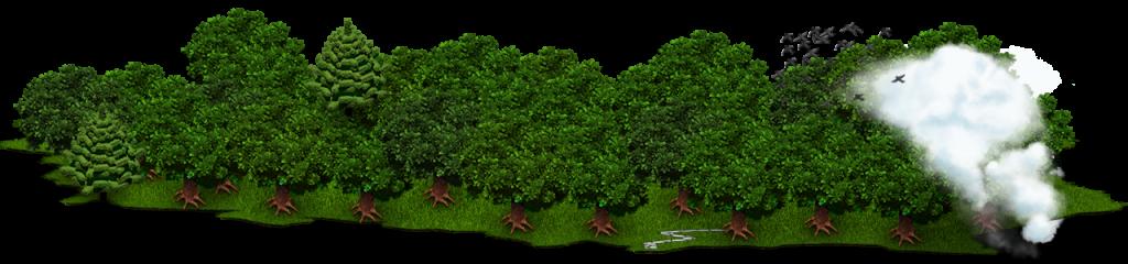 Bannière forêt